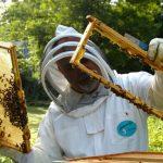 Μελισσοκομικός Σύλλογος Κοζάνης – Γενική Συνέλευση, την Κυριακή 03/03