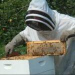 Κέντρο Μελισσοκομίας Δυτικής Μακεδονίας- Παράταση μελισσοκομικών δράσεων