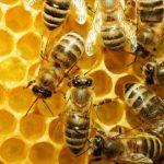 Κοζάνη: Σεμινάριο από τον μελισσοκομικό  Σύλλογο Κοζάνης, την Κυριακή 11 Δεκεμβρίου