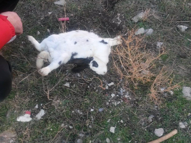 kozan.gr: Αδέσποτα έκαναν επίθεση σε περιφραγμένο οικόπεδο στην Πτολεμαίδα, σκορπίζοντας το θάνατο σε πολλά κουνέλια – Αποκαλυπτικές φωτογραφίες – Τι λέει η Φιλοζωική