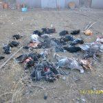 Πτολεμαίδα: 10 γαλόπουλες και 21 κότες κατασπάραξαν αδέσποτα (Φωτογραφίες)