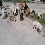 Eθελοντές Κυνοκομείου Πτολεμαΐδας: Ανεξέλεγκτη η κατάσταση με τα αδέσποτα στην ΑΕΒΑΛ