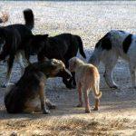 kozan.gr: Yπέβαλλε αίτηση για αποζημίωση από το δήμο Κοζάνης, διότι όπως ισχυρίζεται υπέστη φθορές στο αυτοκίνητό του, από αδέσποτα ζώα – Απορρίφθηκε η αίτησή του