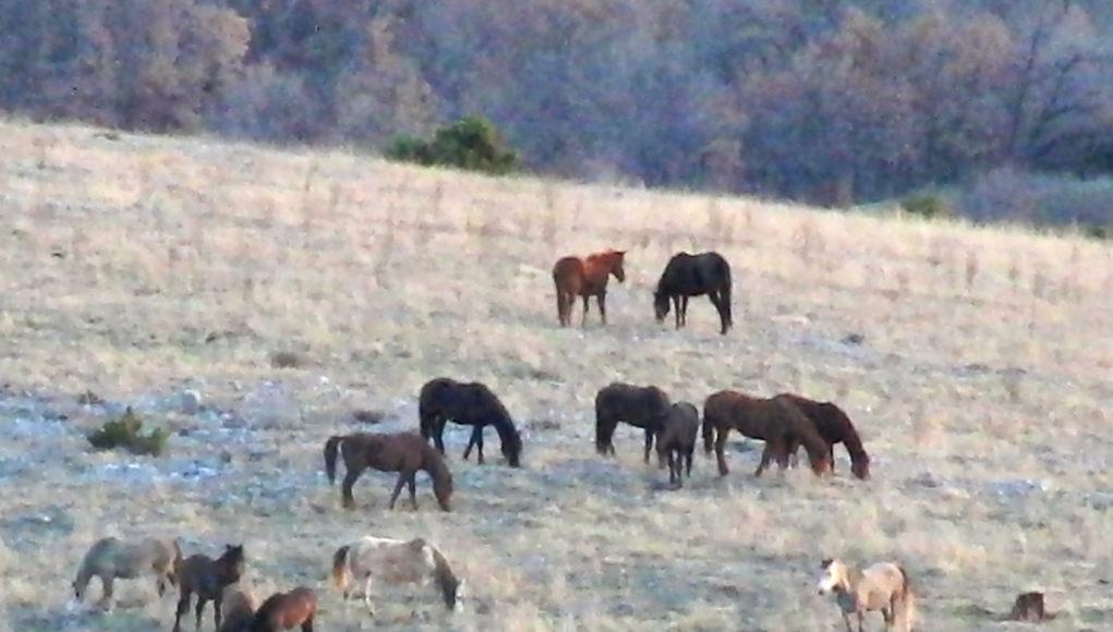 Εορδαία: Κίνδυνος ατυχημάτων από τα άγρια άλογα της Ερμακιάς