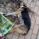 Εθελοντές Κυνοκομείου Πτολεμαίδας: Δηλητηριάσεις ζώων στην Άρδασσα Εορδαίας (Φωτογραφίες)