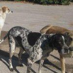 Σε δωρεάν επεμβάσεις στειρώσεων των ζώων συντροφιάς, που φιλοξενούνται στο χώρο του δημοτικού καταφυγίου αδέσποτων ζώων Πτολεμαΐδας, θα προχωρήσει η Help Animal International