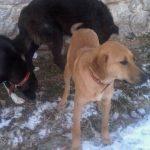 Δήμος Βοΐου και Φιλοζωικός Σύλλογος Σιάτιστας «Η ΕΥΘΥΝΗ»: Έκκληση για υιοθέτηση σκύλων