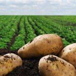 """""""Φούφεια 2018"""": « Γιορτή πατάτας» την Παρασκευή 3 Αυγούστου"""