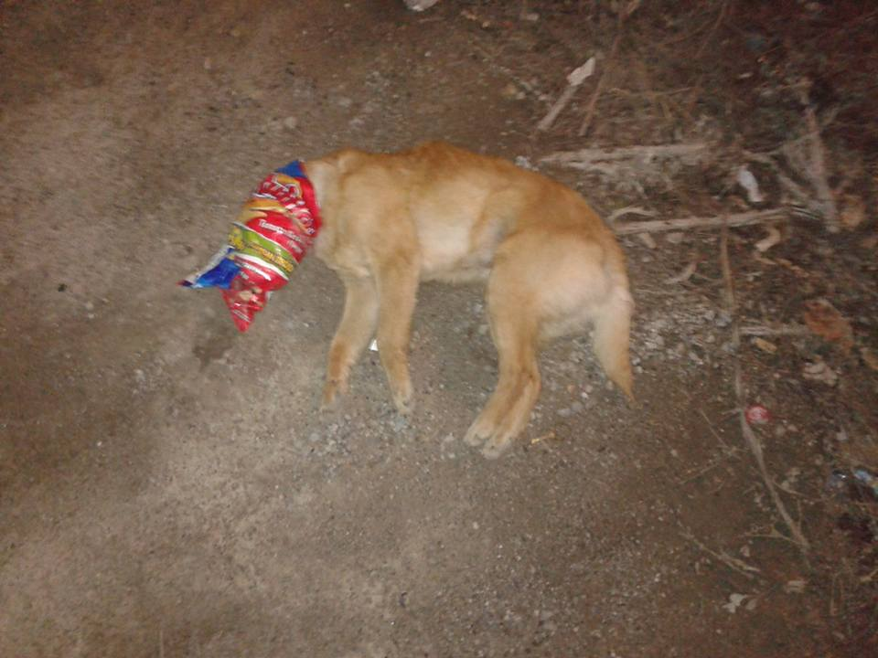 kozan.gr: Κοζάνη: Σκότωσαν κουταβάκι προκαλώντας του ασφυξία (Φωτογραφία)