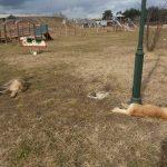 """Εθελοντές Κυνοκομείου Πτολεμαΐδας: """"Ποιοι έχουν άµεση υποχρέωση να αποµακρύνουν από τις οδούς και τα πεζοδρόµια τα νεκρά ζώα"""" (Φωτογραφίες)"""