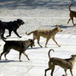 kozan.gr: Σε διαγωνισμό για την προμήθεια εξοπλισμού για τις εγκαταστάσεις του Καταφυγίου Αδέσποτων Ζώων Συντροφιάς, προϋπολογισμού 29.985,68 €, προχωρά ο δήμος Κοζάνης