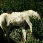 kozan.gr: Δηλητηριασμένη τροφή (φόλες) σε αδέσποτα αρκετών περιοχών της Πτολεμαΐδας