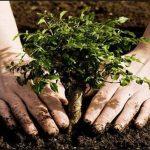 Τομέας Προστασίας Περιβάλλοντος & Αποκατάστασης Εδαφών του Κλάδου Περιβάλλοντος του ΛΚΔΜ: Δενδροφύτευση στο Δημοτικό Διαμέρισμα Αναρράχης Εορδαίας, την Παρασκευή 5/6