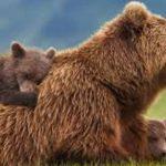 Αναρράχη Εορδαίας (θέση Σταυρός): Απαγόρευση κυκλοφορίας, λόγω αρκούδας, ανήμερα της Πρωτομαγιάς
