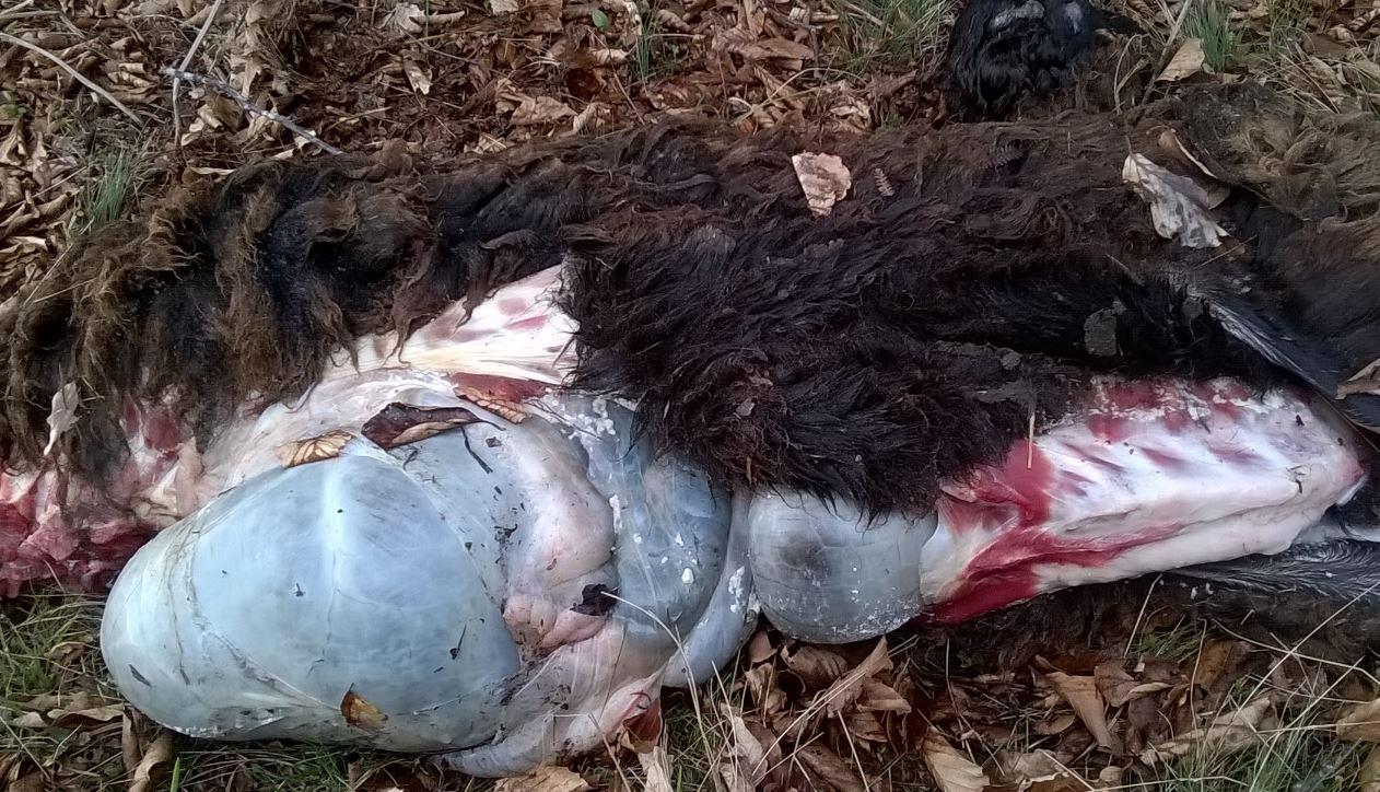 Άγνωστοι τοποθέτησαν δηλητηριασμένα δολώματα στη Βλάστη Eoρδαίας. Νεκρός ένας σκύλος (Φωτογραφίες)