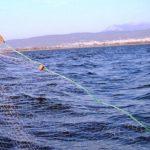 Αθλητικός Σύλλογος Ερασιτεχνών Αλιέων Κοζάνης: Στους ψαράδες λέμε ναι!