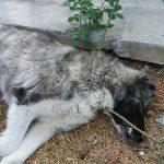 kozan.gr: Αναστάτωση στο παλαιό πάρκο Πτολεμαΐδας, με τον εντοπισμό δηλητηριασμένης τροφής (φόλας), που προκάλεσε το θάνατο σκύλου (Βίντεο)