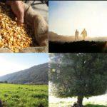 Συμφωνία της Τράπεζας Πειραιώς για Συμβολαιακή Γεωργία με τον  «Αγροτικό Συνεταιρισμό Επεξεργασίας & Πώλησης Οπωροκηπευτικών Προϊόντων Βελβεντού Κοζάνης»