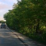 Eπιστολή αναγνώστη στο kozan.gr: Εορδαία: Μείωση πλάτους, σε ήδη, στενό δρόμο και περιορισμός ορατότητας (Φωτογραφίες)