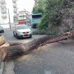 kozan.gr: Έπεσε δέντρο, εξαιτίας της κακοκαιρίας, στην περιοχή του Σιδηροδρομικού Σταθμού Κοζάνης – Κόπηκε κι ένα ακόμη δέντρο, που είχε πάρει κλίση – Τι λένε αρμόδιοι φορείς για τα προβλήματα που δημιουργήθηκαν από τη νεροποντή (Βίντεο & Φωτογραφίες)