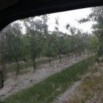 kozan.gr: Μεγάλη ζημιά σε καλλιέργειες, από την ισχυρή χαλαζόπτωση,  στους Πύργους Εορδαίας (Φωτογραφίες)