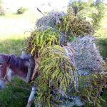 Συνελήφθησαν τρεις αλλοδαποί σε περιοχή της Φλώρινας για παράβαση της δασικής νομοθεσίας – Είχαν συλλέξει από δασική περιοχή της Φλώρινας πάνω από -136- κιλά τσάι βουνού (Φωτογραφίες)