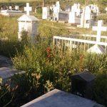 Επιστολή αναγνώστη στο kozan.gr: Eγκατάλειψη στα κοιμητήρια της κοινότητας Πενταβρύσου Εορδαίας  (Φωτογραφίες)