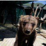 Φλώρινα: Γνωρίστε τον Μπρούνο και τη Μάσα – Τα ορφανά αρκουδάκια που ήρθαν στην Ελλάδα