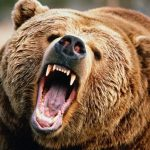 Με βαριά τραύματα νοσηλεύεται στο Νοσοκομείο Καστοριάς νεαρός που πάλεψε με αρκούδα
