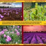 Aνάπτυξη στην Δ. Μακεδονία – Μπορεί να επέλθει με τη δημιουργία θερμοκηπίων ή με την καλλιέργεια αρωματικών φυτών; Mπορεί να γίνει η «Ανδαλουσία» της Ελλάδος (του Σταύρου Π. Καπλάνογλου Γεωπόνου)