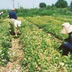 Αποτελέσματα αξιολόγησης των αιτήσεων «Εγκατάσταση Νέων Γεωργών» στην Δ. Μακεδονία