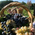 Διεύθυνση Αγροτικής Οικονομίας και Κτηνιατρικής Π.Ε. Κοζάνης: Δηλώσεις συγκομιδής σταφυλιών