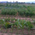 Νέα πρωτοβουλία της Περιφέρειας Δυτικής Μακεδονίας για την υποστήριξη των Δήμων στο πλαίσιο πιλοτικής δημιουργίας Δικτύου Αστικών Λαχανόκηπων, ως σύγχρονο εργαλείο αστικής ανάπτυξης