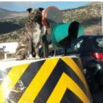 Κοζάνη: Αυτός είναι ο σκύλος… φύλακας των διοδίων στον Πολύμυλο