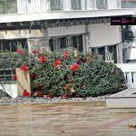 Το πεσμένο  Χριστουγεννιάτικο δέντρο στην Κεντρική Πλατεία Σερβίων  (Φωτογραφίες)