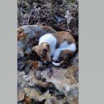 Kαταγγελία στο kozan.gr για μαζικές δηλητηριάσεις σκύλων στο Βοσκοχώρι Κοζάνης (Φωτογραφίες)