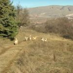 kozan.gr: Eπίθεση από αδέσποτα σε χωματόδρομο μεταξύ Ψηλού Άη Λια και πάρκου Ηπειρωτών, στην Κοζάνη, δέχτηκε συμπολίτης μας (Φωτογραφία)