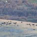 Πτολεμαΐδα: Mε φωτοβολίδες απομάκρυναν τα άγρια άλογα