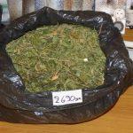 Συνελήφθη 37χρονος στην Κοζάνη για καλλιέργεια -30- δενδρύλλιων κάνναβης σε εργαστήριο υδροπονικής καλλιέργειας & κατοχή 3 κιλών και 282 γραμμαρίων κάνναβης (Φωτογραφίες)