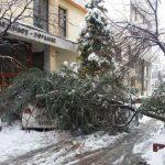 kozan.gr: Πτολεμαΐδα: Πτώση δέντρου, πάνω σε ένα αυτοκίνητο, μπροστά από το Εργατικό Κέντρο Πτολεμαΐδας (Φωτογραφίες & Βίντεο)