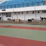 Σχόλιο αναγνώστη στο kozan.gr: Πτολεμαΐδα: Τι θα γίνει με αυτή την κατάσταση; (Φωτογραφίες)