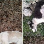kozan.gr: Νέα δηλητηριασμένα ζώα στον Αγ. Χριστόφορο Εορδαίας – Καταγγελία, στην αστυνομία, από τους Εθελοντές Κυνοκομείου Πτολεμαΐδας