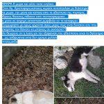 Εθελοντές Κυνοκομείου Πτολεμαΐδας: «Φρικτός θάνατος για 8 σκυλιά στον Αγ. Χριστόφορο Εορδαίας»