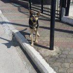 Φιλοζωικό σωματείο Πτολεμαΐδας & Εθελοντές κυνοκομείου: «Θετικό το σχέδιο νόμου για δεσποζόμενα και αδέσποτα ζώα συντροφιάς»