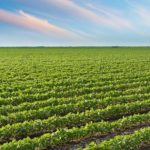 Αγροτικός Συνεταιρισμός Καστοριάς: Η διαφορετική προσέγγιση της επιχειρηματικής καινοτομίας