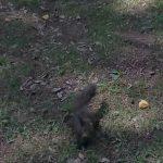 kozan.gr: Τα σκιουράκια, στο πάρκο του Αγ. Δημητρίου στην Κοζάνη, που εκπλήσσουν, ευχάριστα, κάθε φορά με την εμφάνισή τους, μικρούς και μεγάλους (Βίντεο)