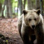 Αποκεντρωμένη  Διοίκηση  Ηπείρου – Δυτικής Μακεδονίας: Λήψη διαχειριστικών μέτρων για την αντιμετώπιση της εμφάνισης αρκούδας  στο Ζωολογικό Κήπο της Φλώρινας