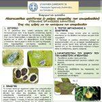 Π.Ε. Κοζάνης: Ο μαύρος αλευρώδης των εσπεριδοειδών Aleyrocanthus spiniferus