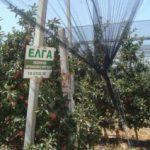 Ημερίδα, στην Κοζάνη, για την επιδότηση αντιχαλαζικών διχτυών, από τον ΕΛΓΑ