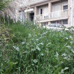 kozan.gr: Kαταγγελία αναγνώστη: Κοζάνη: Μας «έφαγαν» τα χόρτα…